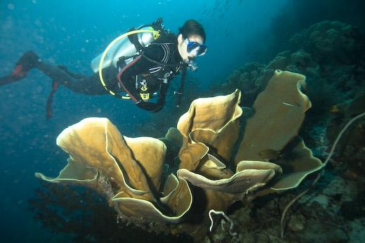 http://travelyuk.files.wordpress.com/2010/07/raja-ampat-diving.jpg